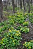 与猿猴草属palustris的春天风景 库存照片
