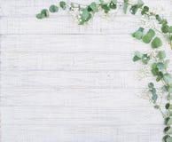 与玉树分支的自然花卉框架 免版税库存图片