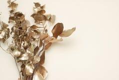 与玉树干燥叶子的金黄树枝在白色背景的与拷贝空间 库存照片
