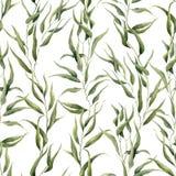 与玉树的水彩绿色花卉无缝的样式离开 与玉树isola分支和叶子的手画样式  免版税库存图片
