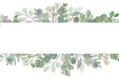 与玉树美元银叶和分支的水彩手画豪华的横幅  库存例证