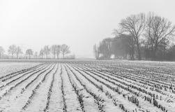 与玉米发茬的积雪的领域在一有雾的天 免版税库存照片