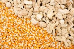 与玉米棒的玉米种子 免版税库存图片