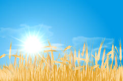 与玉米田、太阳和云彩的抽象夏天风景 免版税图库摄影