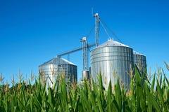 与玉米的领域的蓝天筒仓 免版税图库摄影