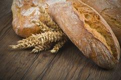 与玉米穗的Ciabatta面包 库存图片