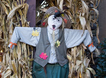 与玉米茎的稻草人 免版税库存照片