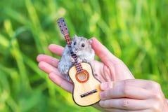 与玩具吉他的一只小仓鼠 库存照片