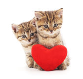 与玩具心脏的小猫 免版税库存图片