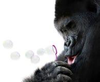 与玩具泡影鞭子的大猩猩吹的肥皂泡的异常的动物画象 免版税库存图片