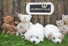 与玩具熊的两只小的小狗和在ba的一个木标志 图库摄影