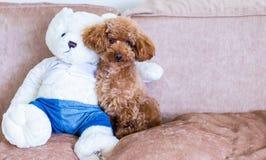 与玩具熊的狗 免版税库存图片