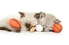 与玩具的两只逗人喜爱的小猫 免版税库存照片