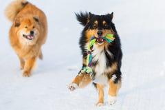 与玩具的狗和在雪的另一条狗 库存照片
