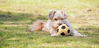 与玩具的狗 免版税库存照片