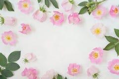 与玫瑰、桃红色在白色背景和叶子的圆的框架花圈样式隔绝的花蕾、分支 平的位置,上面 免版税库存照片