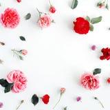 与玫瑰、桃红色在白色背景和叶子的圆的框架花圈样式隔绝的花蕾、分支 库存照片