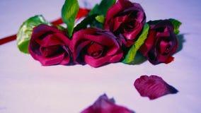 与玫瑰和瓣英尺长度的情人节  股票视频
