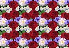 与玫瑰大丽花翠菊的水平的无缝的背景 库存图片