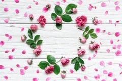与玫瑰的圆的框架花纹花样开花,芽、瓣、分支和叶子 免版税库存照片