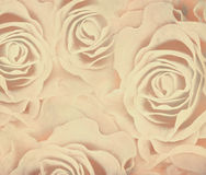 与玫瑰的抽象背景 免版税图库摄影
