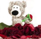 与玫瑰的熊 库存图片