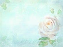 与玫瑰色花的卡片在轻的绿松石背景 邀请、婚礼、生日、周年或者相似的事件的模板, 库存图片