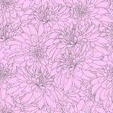 与玫瑰色菊花的无缝的样式 设计的不尽的纹理 与菊花的传染媒介背景您的 向量例证