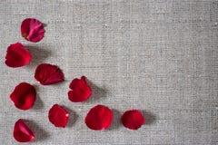 与玫瑰花瓣的浪漫背景 免版税库存照片