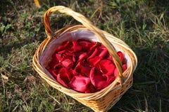 与玫瑰花瓣的篮子在草 库存图片