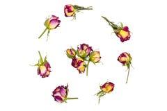 与玫瑰,花蕾的分支的圆的框架花圈样式 库存图片