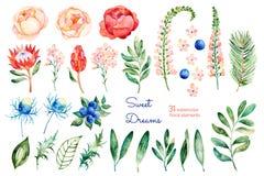 与玫瑰,花,叶子,普罗梯亚木,蓝色莓果,云杉的分支,刺芹属植物的五颜六色的花卉收藏 免版税库存图片