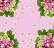 与玫瑰,雏菊的风景桃红色花卉背景 库存图片