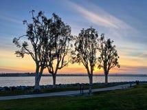 与现出轮廓的树的不可思议的日落沿都市的江边 免版税图库摄影