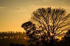 与现出轮廓的树的日落 库存照片