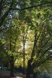 与现出轮廓的树的长凳 库存图片