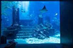 与现实城市废墟的亚特兰提斯主题的公开水族馆显示 库存照片