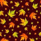 与现实槭树叶子的传染媒介无缝的样式 库存照片