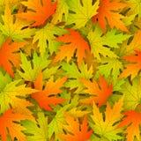 与现实槭树叶子的秋天背景 免版税库存照片