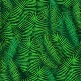 与现实热带棕榈叶的夏天无缝的样式设计 异乎寻常的密林背景 图库摄影
