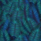 与现实热带棕榈叶的夏天无缝的样式设计 异乎寻常的密林背景 免版税库存图片