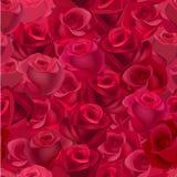 与现实玫瑰的无缝的样式 免版税库存照片