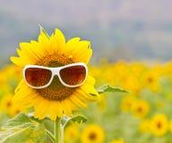 与玻璃的向日葵 库存照片