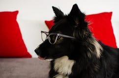 与玻璃的狗 库存照片