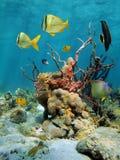 与珊瑚和海运海绵的五颜六色的海里的视图 图库摄影
