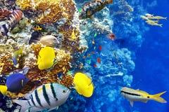 与珊瑚和热带鱼的水下的世界 库存照片