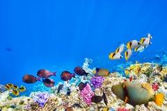 与珊瑚和热带鱼的水下的世界 免版税库存图片