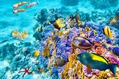 与珊瑚和热带鱼的水下的世界 库存图片