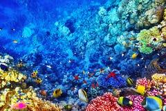 与珊瑚和tropica的美妙和美丽的水下的世界 免版税图库摄影