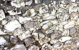 与珊瑚墙壁的大厦 免版税库存图片